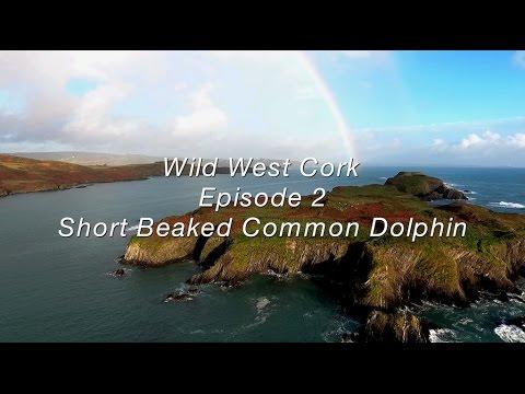 Wild West Cork Episode 2: The Short Beaked Common Dolphin