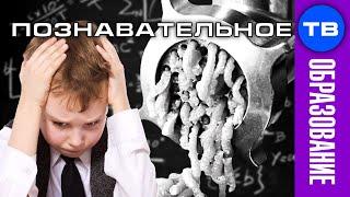Школьная МЯСОРУБКА для детских мозгов (Артём Войтенков)