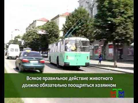 Правила транспортировки собак в общественном и частном транспорте.
