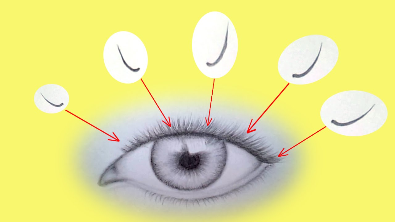 How to draw eyelashes tutorial for beginners youtube