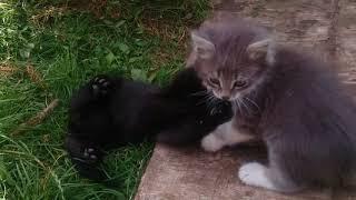 Котята ищут любящую семью!