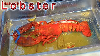 Lobster - Akita Farm, The Biggest Crabs and Seafoods Festival in Thailand | Bangkok Street Food
