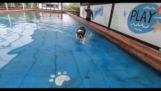 :30 Seconds of Lulu Running, Swimming, and Jumping