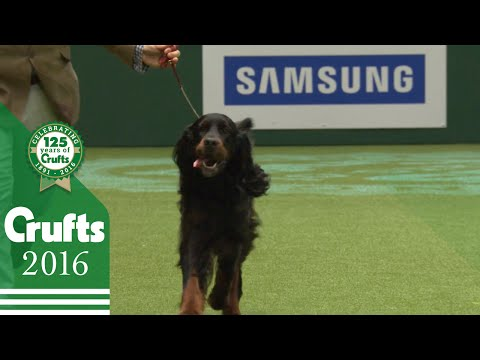 Gundog Group Winners Interview | Crufts 2016