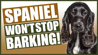 How To Stop Your SPANIEL Barking