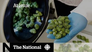 The politics of pot and Stephen Harper's book tour | At Issue