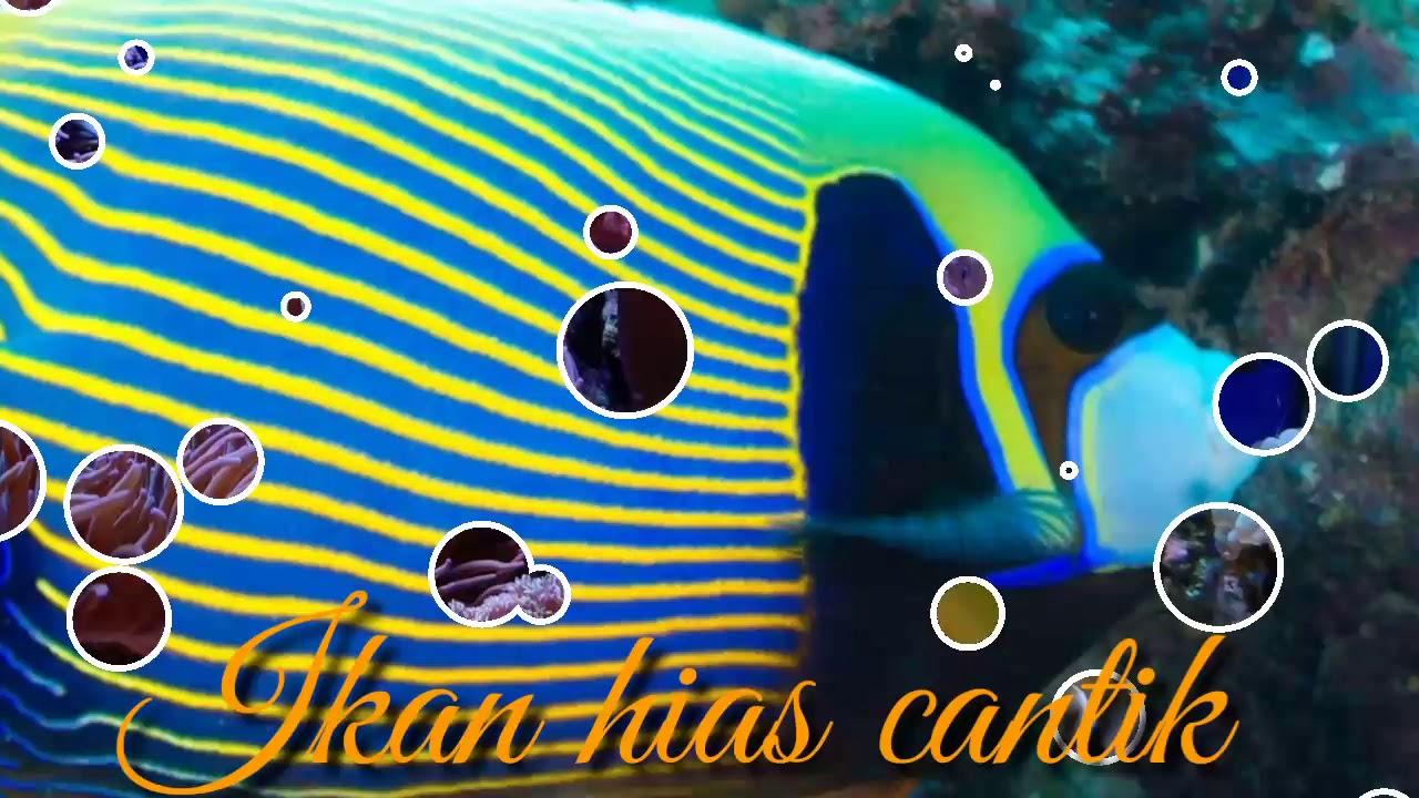 Ikan Cantik