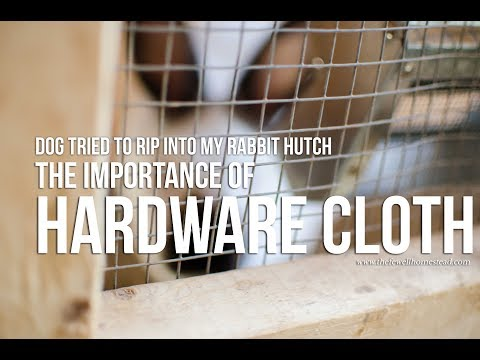 Dog Tried to Rip Into My Rabbit Hutch || Hardware Cloth