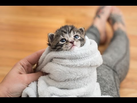 5 Ways to Comfort a Kitten