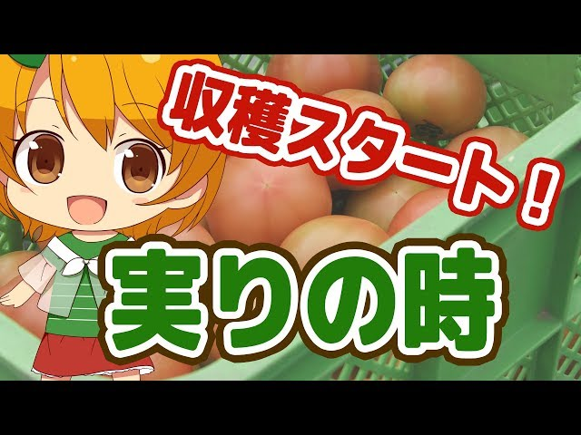 【実りの時】収穫スタート!!
