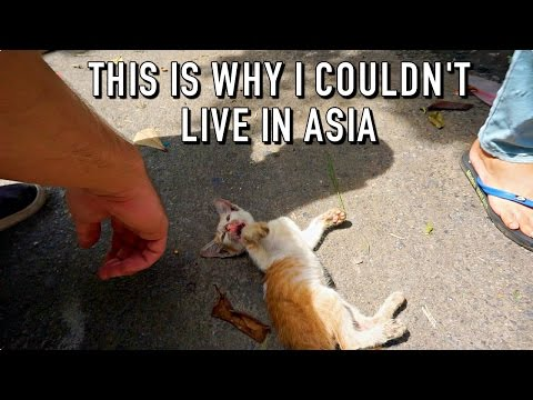 THIS IS WHY I COULDN'T LIVE IN ASIA! | Hoi An, Vietnam