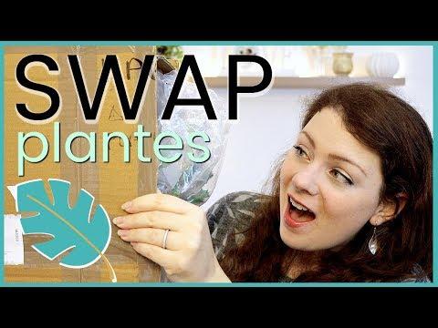 SWAP - On s'envoie des plantes, boutures et cadeaux avec Une fleur parmi les fleurs | Swap Plantes