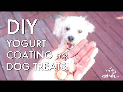 Video: DIY Yogurt Coating For Dog Treats