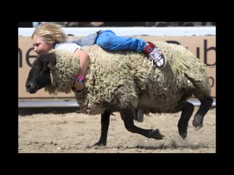 Children turn sheep rider at rodeo   national   Stuff co nz 1 Mp3