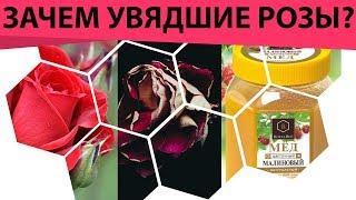 зачем вам увядшие розы? Причём тут мёд и увядшие розы? Как сделать лосьон из лепестков роз!