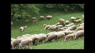Farma ovaca u selu Nadumce, Tutin - U nasem ataru 341