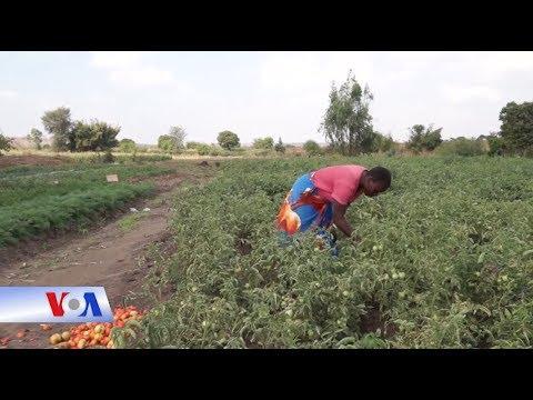 Malawi: Máy bay không người lái giúp giảm đói nghèo (VOA)