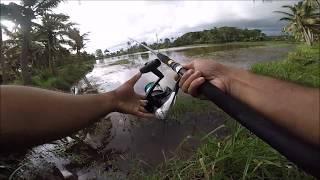 Black&yellow ഹുക്ക് ആയ ചേറുമീൻ -Snakehead fishing using jump frog