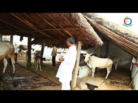 Natural Farming | The Importance of Desi Cow in Agriculture (English) | Narasimhappa