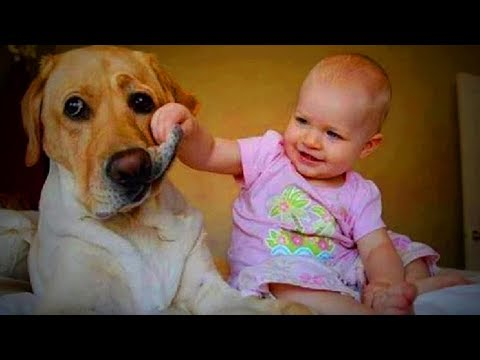 Funny Cute Puppies 😜🐶 Funny Dogs (Part 2) [Funny Pets]