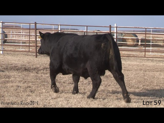 Payne Angus Ranch Lot 59