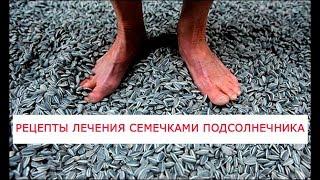 Целебные свойства семечек подсолнечника  Рецепты лечения семечками подсолнечника