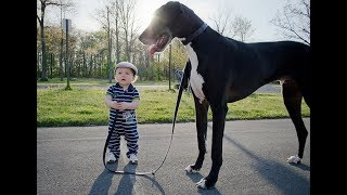 Funny Babies And Dogs Playing Together - Funny Hub
