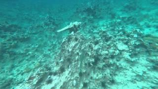 Freestyle Catamaran Snorkeling Trip - Sosua Bay Puerto Plata