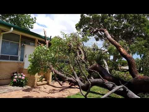 Perth storms: Huge tree falls at High Wycombe Primary School