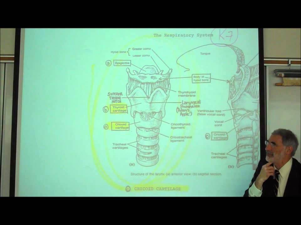 ANATOMY; RESPIRATORY SYSTEM; PART 1; Upper Tract; Nose, Pharynx ...