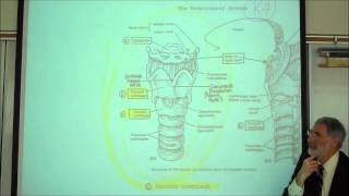 ANATOMY; RESPIRATORY SYSTEM; PART 1; Upper Tract; Nose, Pharynx & Larynx; by Professor Fink