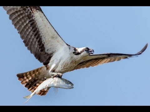How To Photograph Flying Birds: Shutter Speed, Aperture