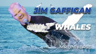 """Whales"" - Jim Gaffigan Stand Up (Mr.Universe)"