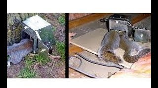 Reviews: Best Squirrel Trap