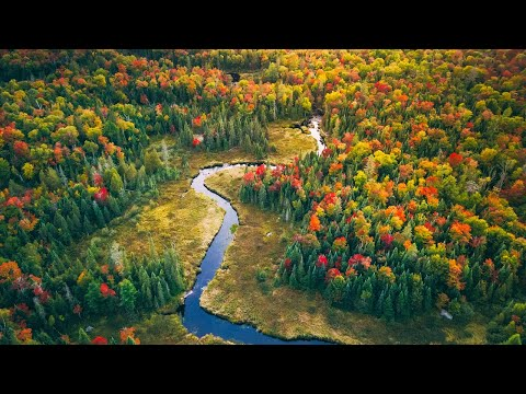 Autumn In The Canadian Wilderness