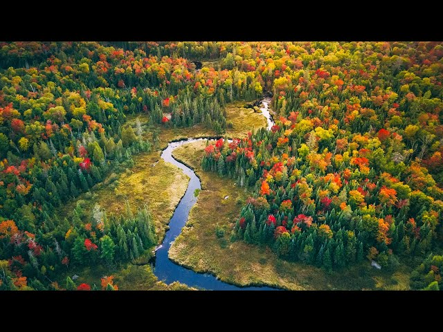 Relaxation in Nature | Autumn in the Canadian Wilderness