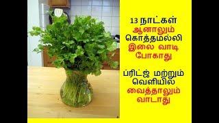 13 நாட்கள் ஆனாலும் கொத்தமல்லி, கருவேப்பிலை, புதினா வாடிபோகாது  | fresh corriander