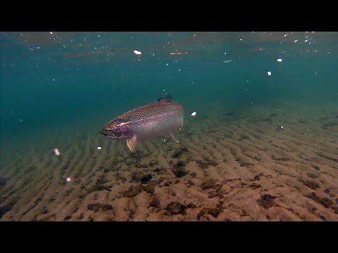 Winter Bank Fishing For Trout At Lake Roosevelt, Washington