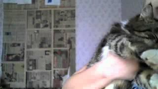Спасите-моего-кота!