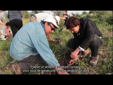 French: Planting Trees In Israel From Your Sofa
