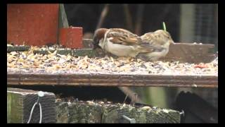 More Birds On My Bird Feeder Table  27 May 2014