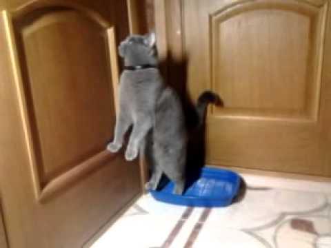Кот гадит в раковину