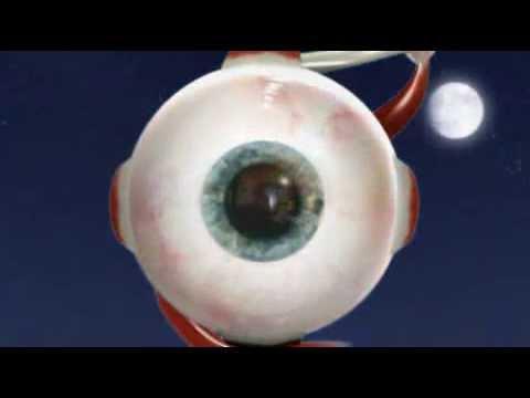 BBC Eye Pupil Reflex