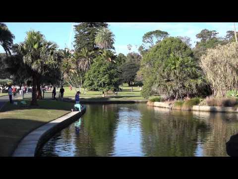 Sydney Botanic Gardens Shot In 4K