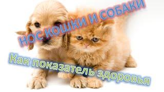 Нос собак и кошек как показатель здоровья