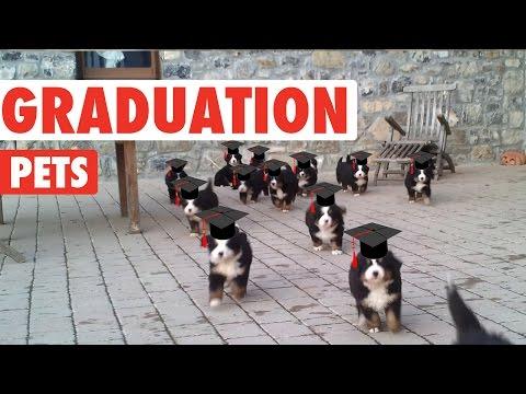Relatable Graduating Pet Compilation 2016
