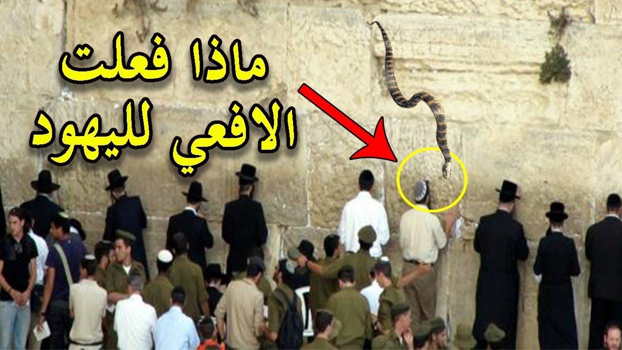 شاهد خروج أفعي في حائط البراق (المبكي) لليهود اثناء صلاتهم بجوار  المسجد الاقصي