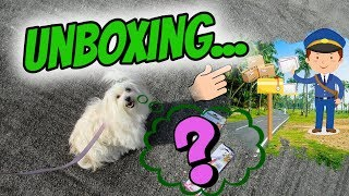 📦Unboxing for my Dog 2018, Coton de Tulear I Lorentix