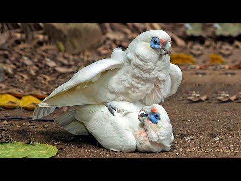 Most Amazing Exotic Birds   fewminutes