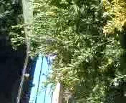 robert bush jump